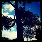 duurzame marketing zonder bomen