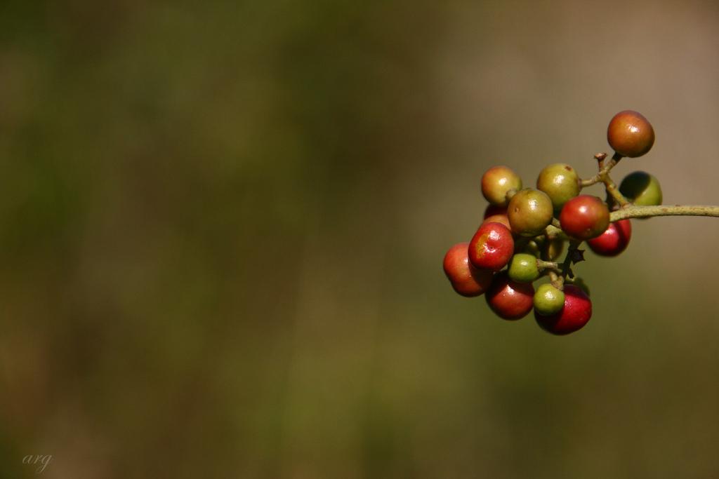 laag hangend fruit