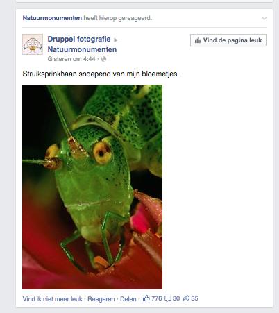 user generated content facebook